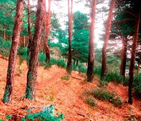 Campamento en la sierra de Madrid para adultos